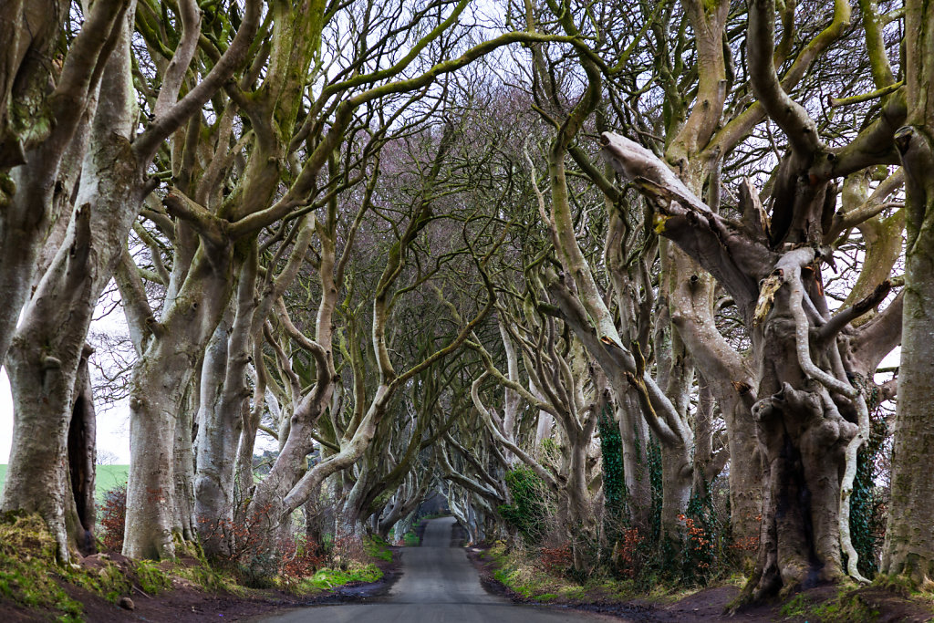 20180222-The-Dark-Hedges-017-2.jpg